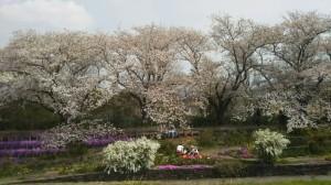 Photo_18-04-03-15-27-51.950